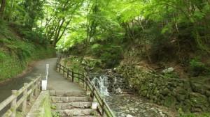 自然あふれる散策路