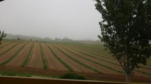 富良野の朝